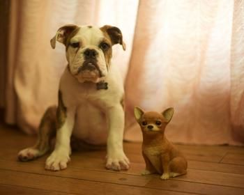 When You Need Dog Advice, Read This Article >>> More info about pet dogs could be found at the image url.