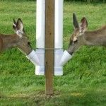 PVC Deer Feeder / This should get you plenty of attention providing you keep it fill.