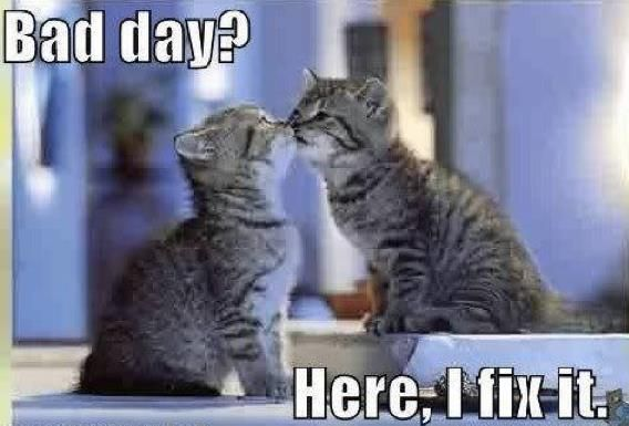 Bad Day?: A Kiss, Animal Pictures, Feelings Better, Sweet, Quotes, Funny Pictures, Funny Kittens, Bad Day, Cat Photos
