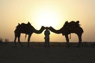 Lisarey Photography - Camels = Love