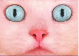 Image result for pink cat