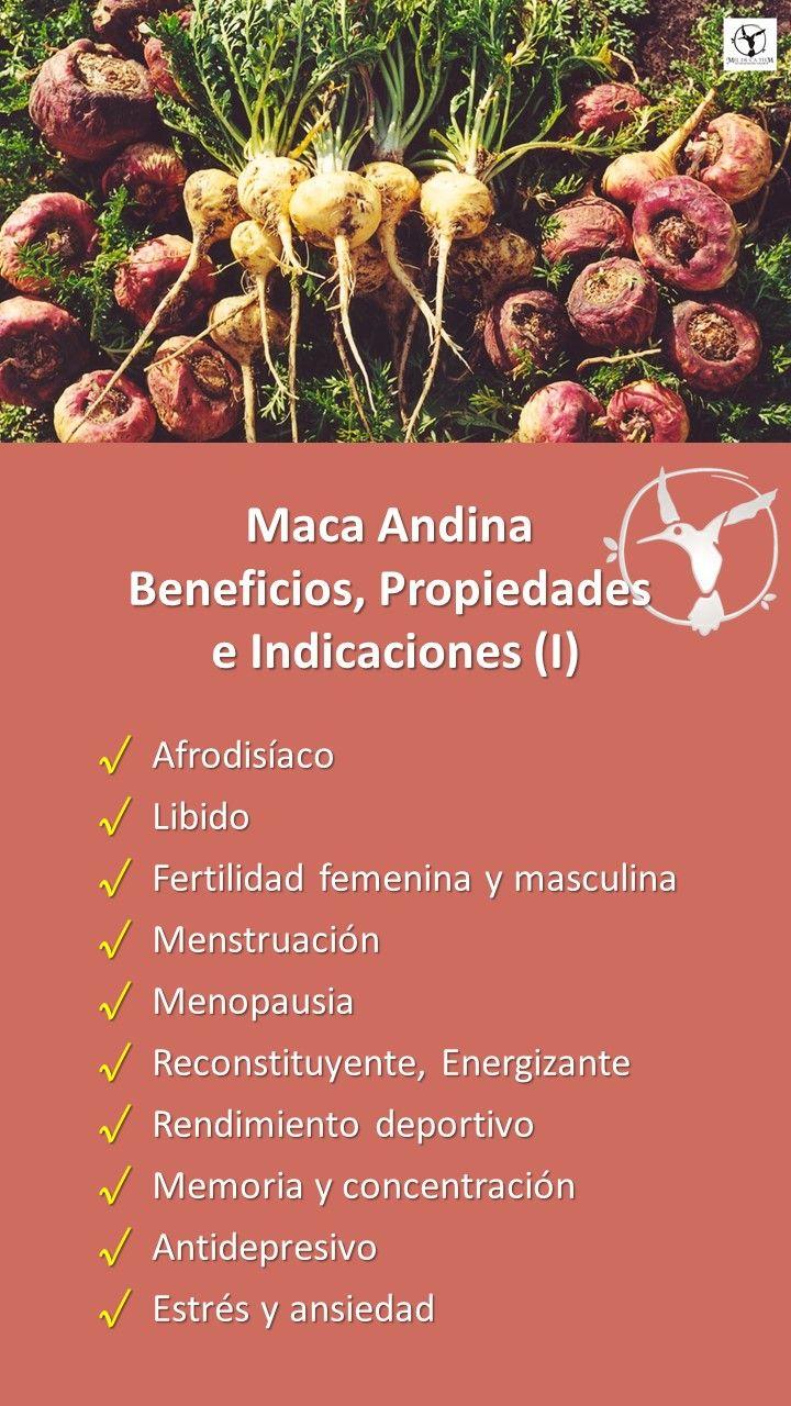 #maca #andina #beneficios #propiedades #capsulas #fertilidad #infertilidad #menopausia #nutricion #peruana #quees #vitaminas #enpolvo #acne #salud #mujer #español #hormonas #libido #negra #organica #suplemento #usos