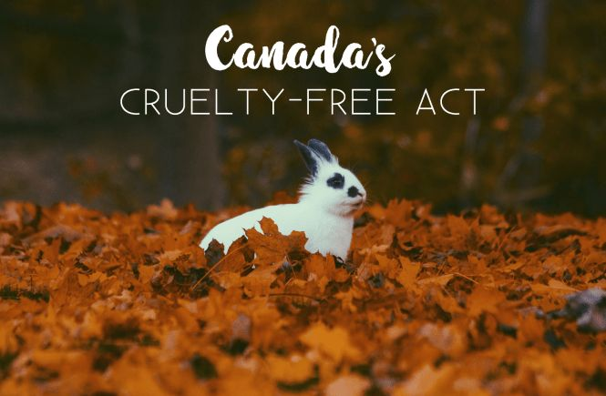 Is Canada Going Cruelty-Free? Check out the link above to find out! #canada #crueltyfree #thesoulfulbunny