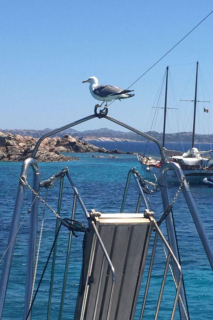 Www.lineadelleisole.com Escursioni nell'arcipelago di La Maddalena - excursions in the archipelago of La Maddalena