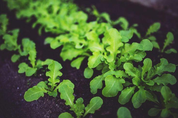 Herbs garden grow in your yard smoker cooking herbs