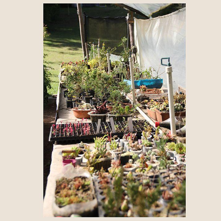 Taller de Hierbas // Invernadero #Plants #Succulent #Plant #Plantas #Greenhouse