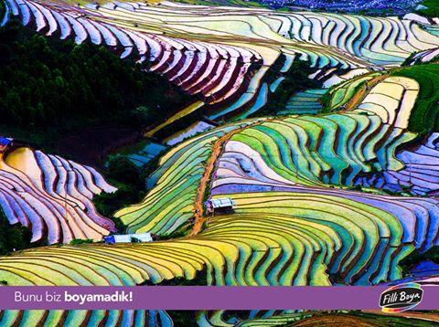 Vietnam'da yer alan Pirinç Tarlaları muhteşem doğası ve büyüleyici renkleriyle tüm dünyayı doğaya hayran bırakıyor. #BunuBizBoyamadık