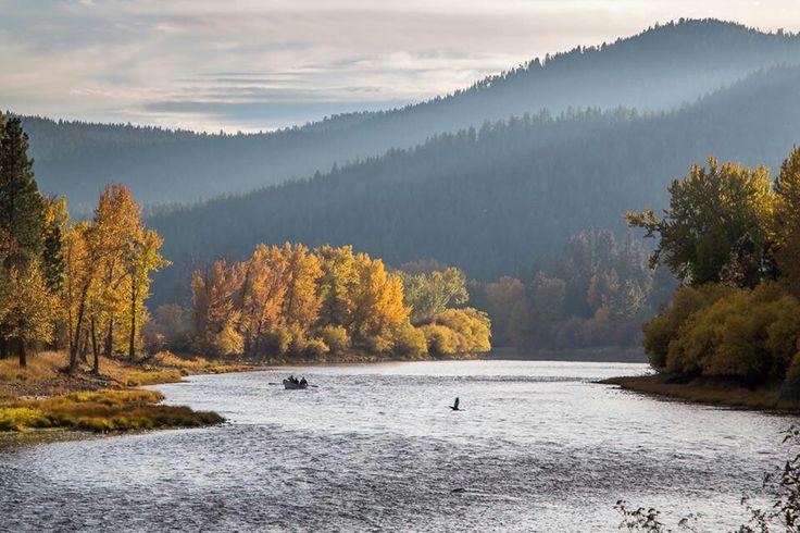 Bitterroot, Montana
