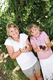 Orchards and Pick Your Own! - Visit Young