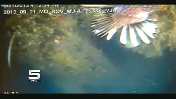 Invasive Fish Found in South Texas | KRGV.com | CHANNEL 5 NEWS | Breaking News Breaking Stories