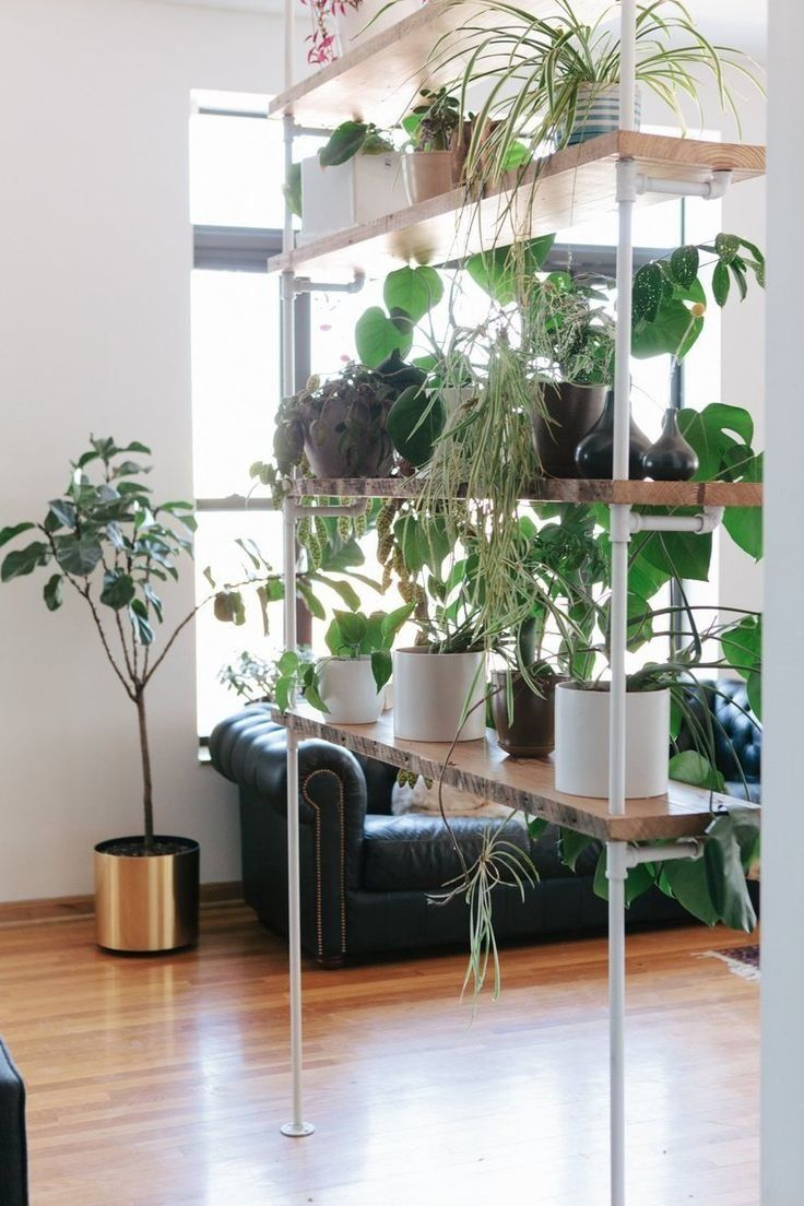 Best Potted Plants For Balcony Indoor Living Room Ideas How To