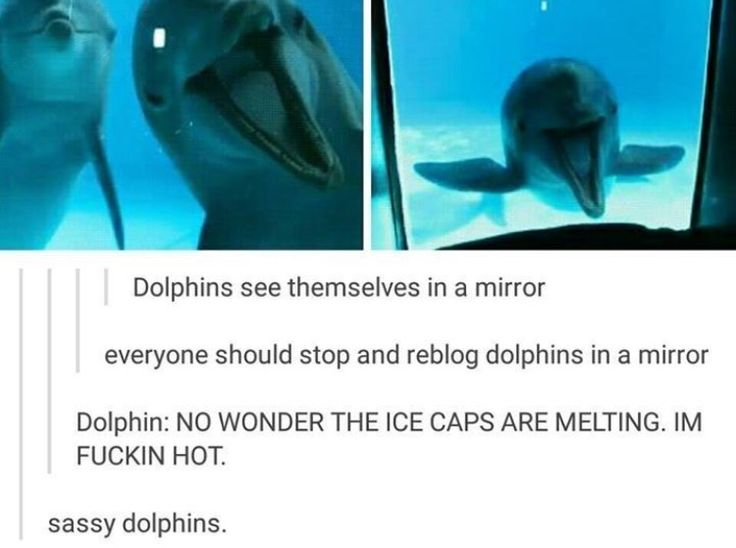 They've become self-aware. It is too late. Resistance is futile. All hail the dolphin overlords.