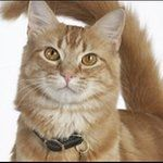 10 Surprising Cat-Care Tips - ABC News