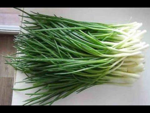 Как вырастить зеленый лук в пакете без земли - Сам себе волшебник