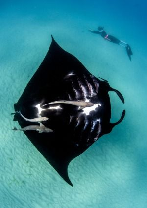 Ningaloo Reef, Western Australia: Is this Australia's best reef?
