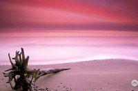 """НА МОРЕ: РОЗОВЫЙ ПЕСЧАНЫЙ ПЛЯЖ  Остров Харбор совсем небольшого размера — всего в 5 км в длину и километр в ширину. Местные жители называют его """"Briland"""" . Коммерческий и социальный центр острова город Данмор, с его великолепной архитектурой в стиле 19-го века, в прошлом был столицей Багамских островов. Но главной достопримечательностью острова, конечно же, является 5 километров удивительного по красоте розового песка на Pink Sand Beach..."""