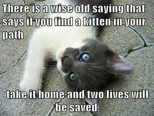 1622 best Animals - Meow, meow, M-E-O-W!!! images on ...
