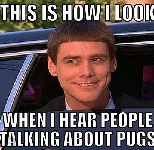 This is how I look when I hear people talking about pugs. #truestory