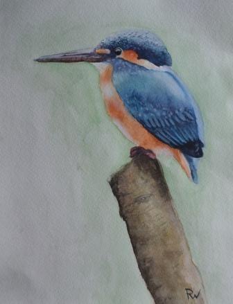 ijsvogel in aquarel