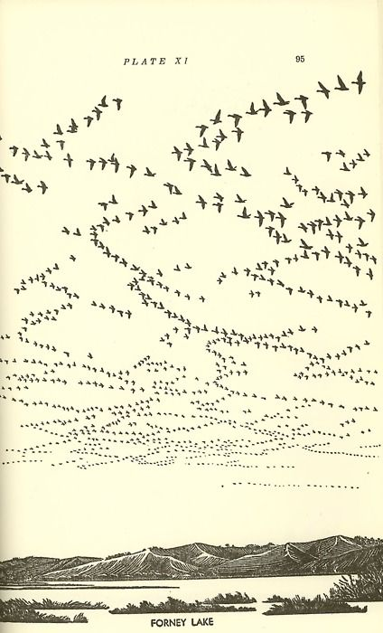 "Illustration ""Forney Lake"" from the book, Waterfowl in Iowa  Source: The Bookworks"