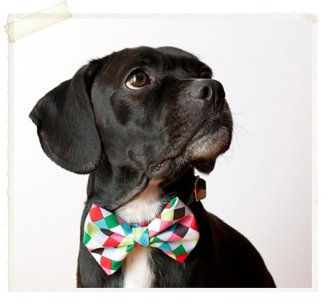 if i had a dog...: Dogs, Bow Ties, Pet, Bowties, Bows, Puppy, Animal