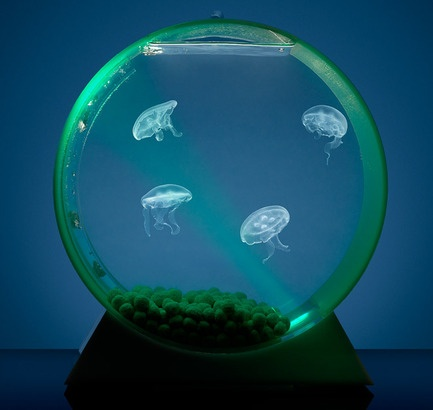 How cool is this?!?! Way cooler than your ordinary fishtank!  What a great idea for a centerpiece!