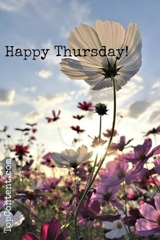 """Happy Thursday! ❤️...i actually got Tulip-""""You're sweet and sensitive. You cherish your family and friends and you are also passionate about traveling. """" LOL...not my fav flower but ok :)"""