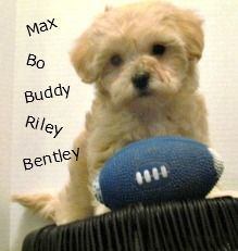 Tons of Boy Shih Tzu Names for your New Puppy.  http://miracleshihtzu.com