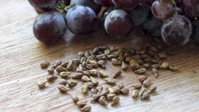 Estas semillas dejarían sin trabajo a muchos doctores, porque destruye hasta la enfermedad más mortífera   Salud con Remedios