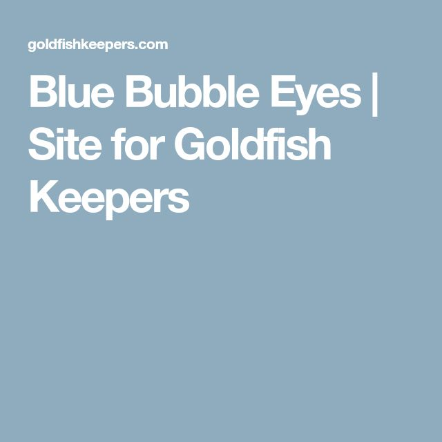Blue Bubble Eyes | Site for Goldfish Keepers