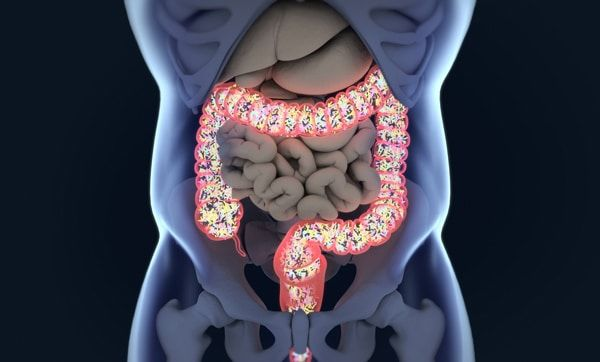 Why the Gut Microbiome Is Crucial for Your Health | http://sibeda.com/why-the-gut-microbiome-is-crucial-for-your-health/