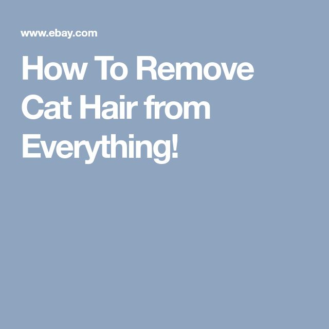How To Remove Cat Hair from Everything!