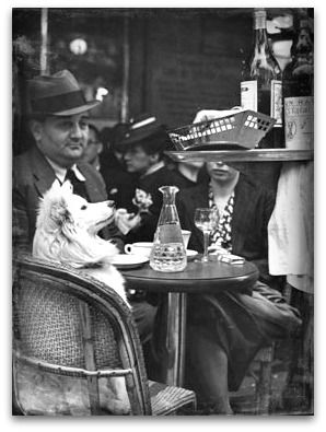 Parisien Dog at a Cafe with Owners