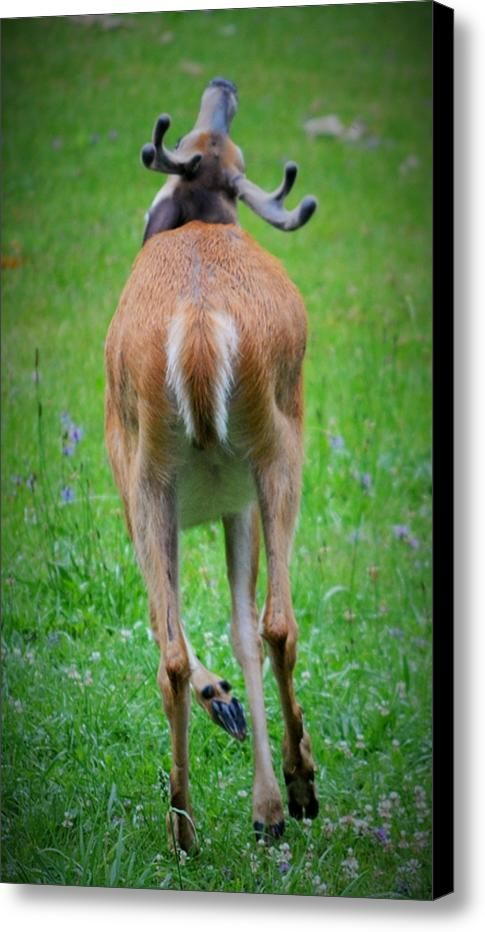 Runaway Deer Canvas Print / Canvas Art By Josh Schwindt - Original photographs printed in a wide variety of formats, from canvas to metal and more.