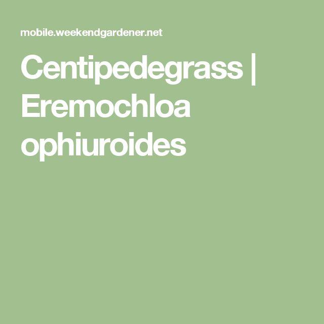 Centipedegrass | Eremochloa ophiuroides