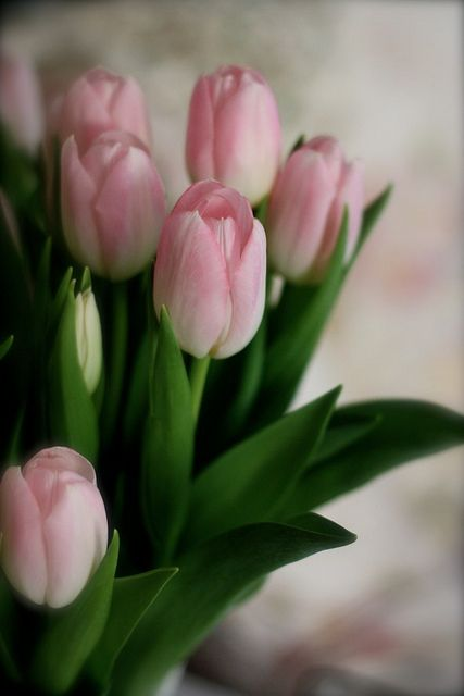 Pink Tulips ~ Colette Le Mason @}-,-;---