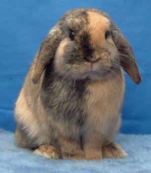 half and half bunny