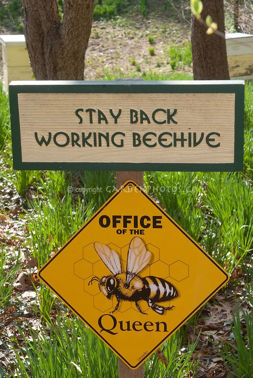 sign near bee hives ~ orders of the Queen