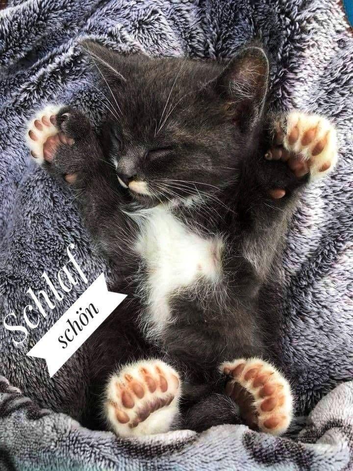 Pin von Mildred Hammonda auf Cat Katze | Gute nacht katze