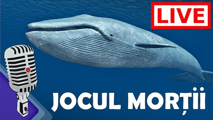 Despre Balena Albastră sau jocul morții | România LIVE