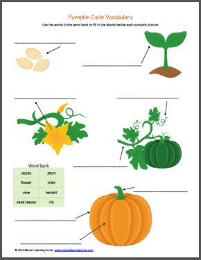 Pumpkin Life Cycle Worksheets   Note-booking/Lap Books ...