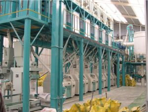 automatic complete maize mill machine and wheat flour mill machine. #maizemillmachine #maizeflourmillmachine   #maizemillplant #maizemillingmachine #maizeflourmillingmachine #cornmillmachine #cornflourmillingplant   #flourmill