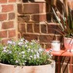 Planting a Perennial Garden