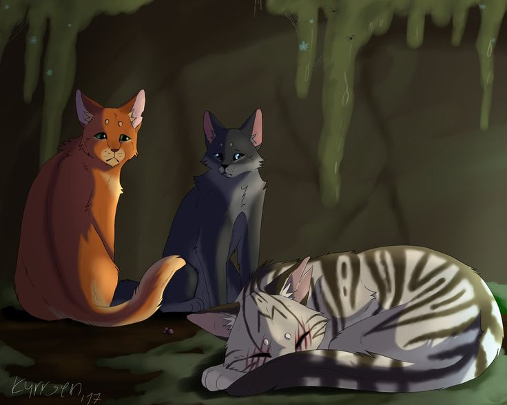 Blind son - Firestar, Cinderpelt and Longtail by kyrrsen on DeviantArt