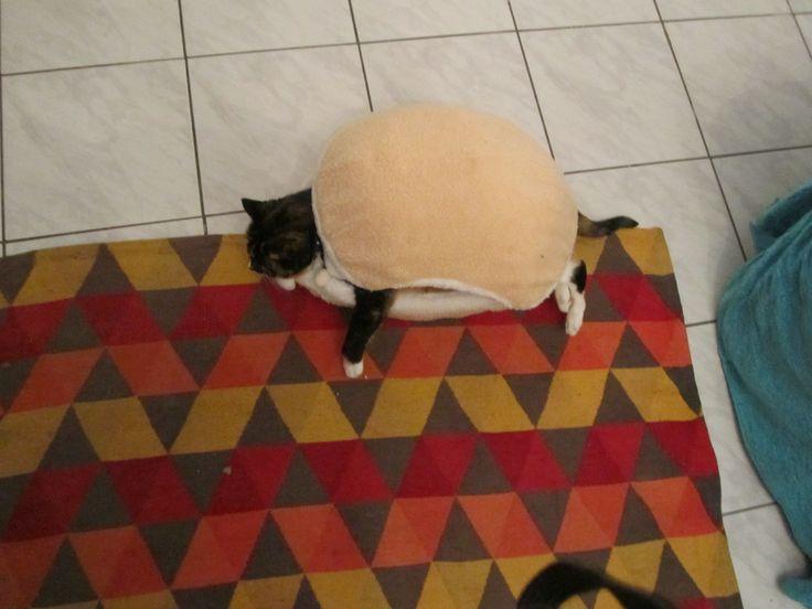 Cat burger 13