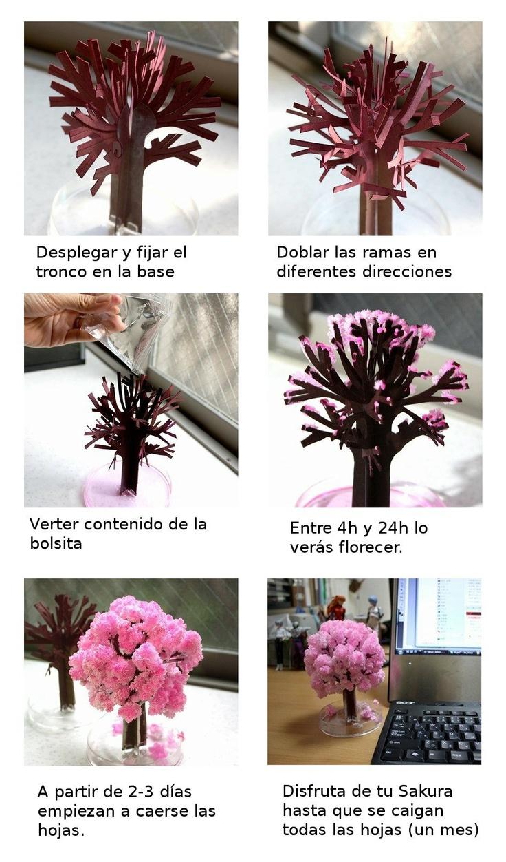 Mini cerezo floreciente japonés