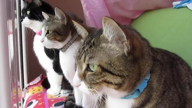 Cats Talking To Each Other Funny Video Cat Drooling Cats And Kittens Cat Talk