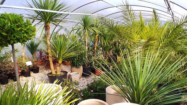 The nursery is starting fill up now with lots of exciting new plants. Lots more arriving in the next few weeks too!