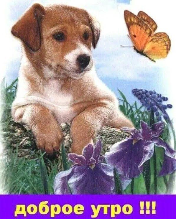 Красивые картинки со зверюшками с добрым утром, анимационной открытке