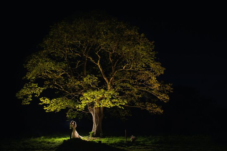 Up lighting in tree for wedding photo    Keeble Wedding Collection Photo By Big Fish Photography
